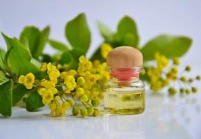 chamolille essential oil